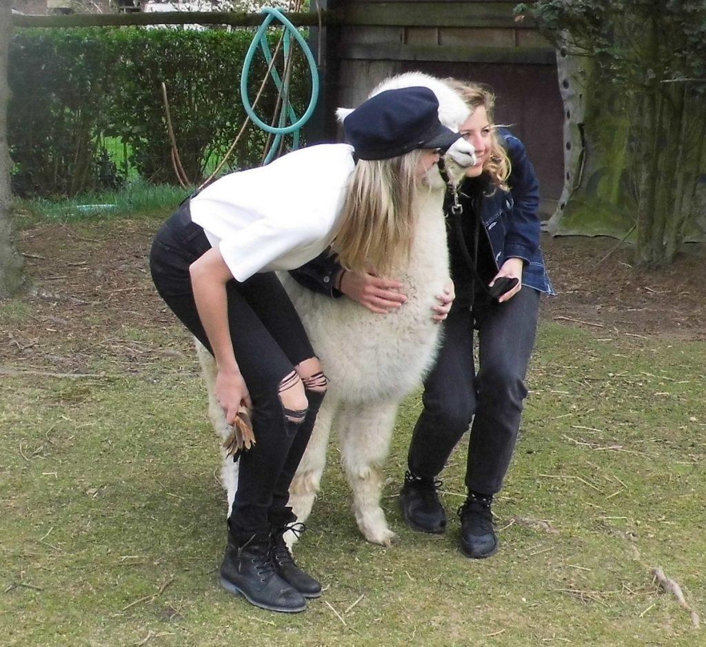 De dames willen met de lieve alpaca op de foto