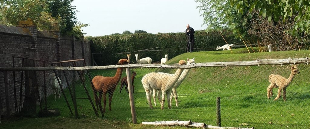 Leonardo filmt de alpaca's voor de documentaire op Rai TV in Italië.