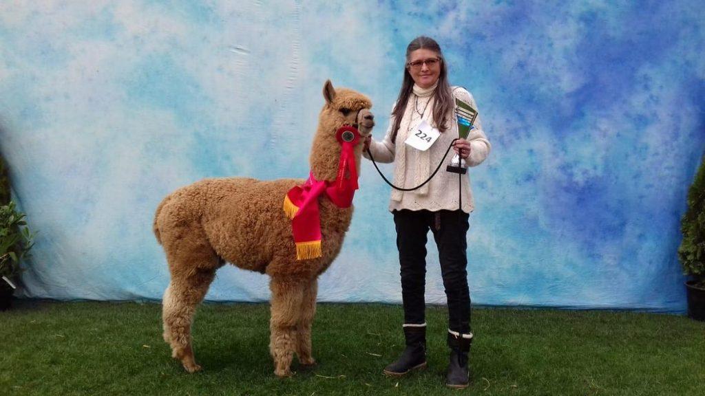 Irmgard met alpaca wollen trui en sjaal is bijna net zo mooi als onze kleurkampioen BAM Kosmo.