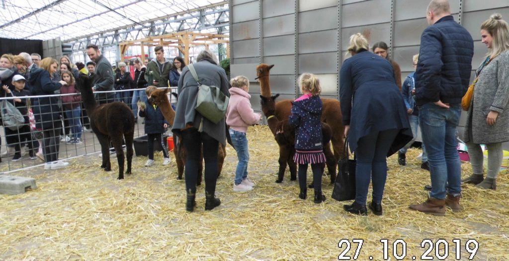 De kinderen vinden de alpaca's leuk en de jonge alpaca's vinden de kinderen leuk.