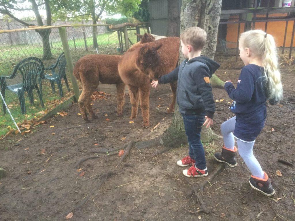 Kinderen en alpaca's