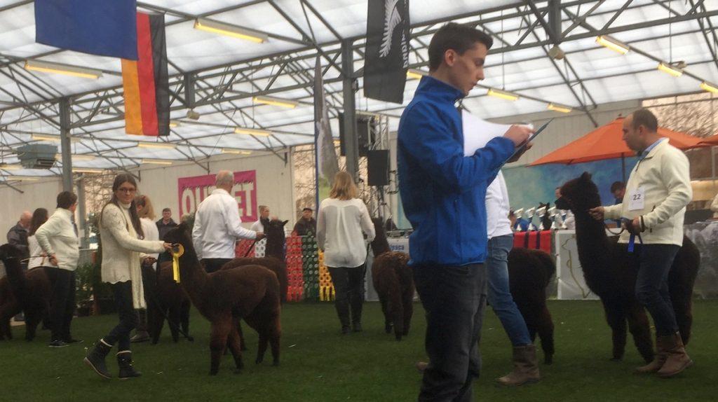 BAM Laika wint prijs op de alpaca show Boekel in 2019 bij de zwarte junior merries.
