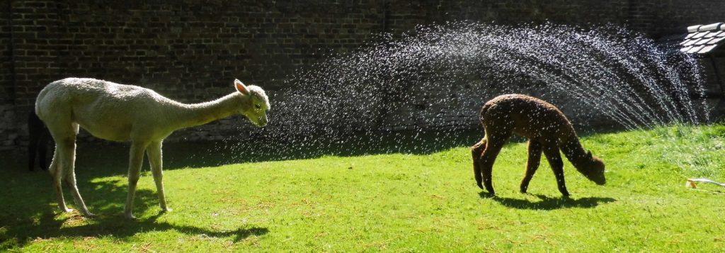 Healey gaat graag onder de douche. Ze is gek op water.