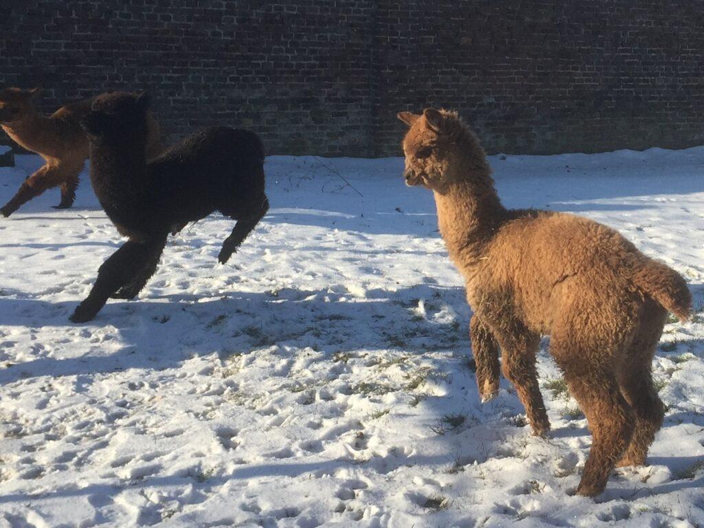 BAM Nidra speelt in de sneeuw